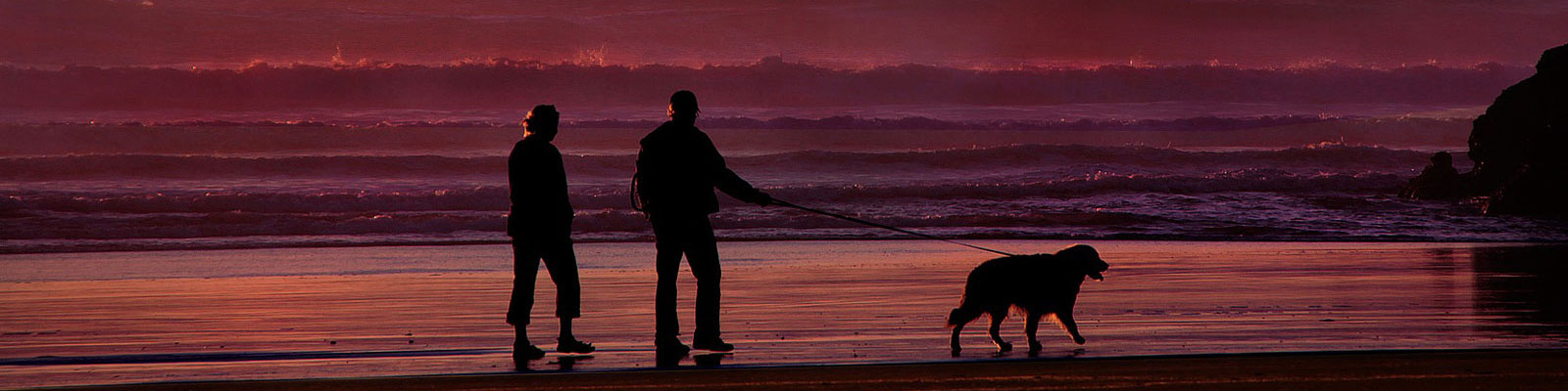 couple walking their dog at sunset on the beach